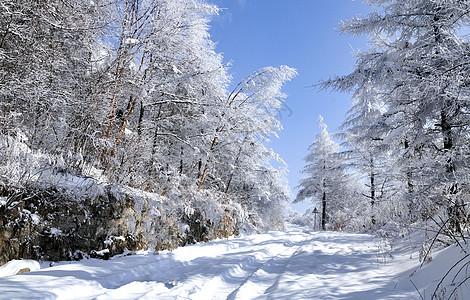 大秦岭_下雨天的森林高清图片下载-正版图片500786402-摄图网