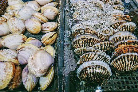 海鲜市场里鲜活的白蛤和扇贝图片