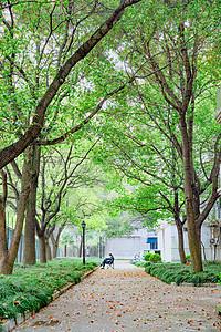 春天校园树林走道图片