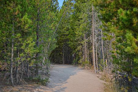 美国黄石公园森林图片