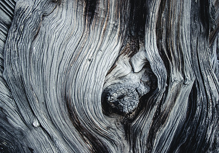 树木纹理图片