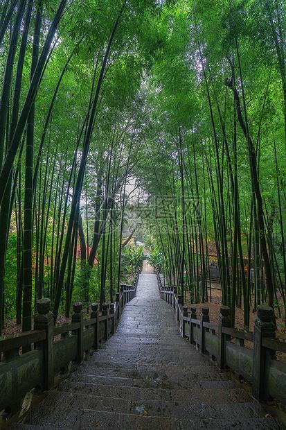 江西九江东林寺竹林图片