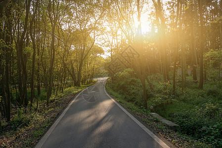 傍晚的阳光撒过户外森林小路图片