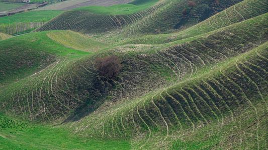 新疆伊犁高山波浪草甸图片