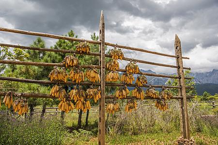 香格里拉青稞玉米架图片