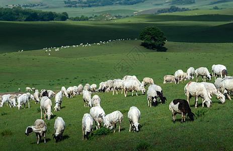 草原上的牛羊图片