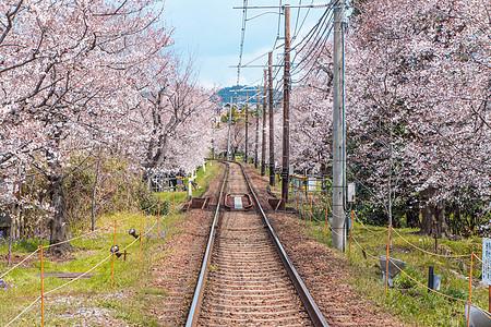 日本京都岚电樱花隧道图片