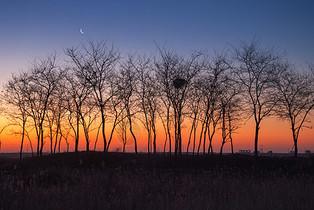 晨曦中的树图片
