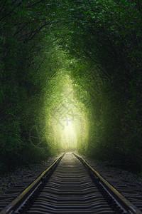 爱情森林隧道图片