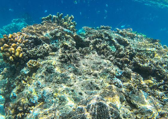 马来西亚仙本那海底鱼群图片