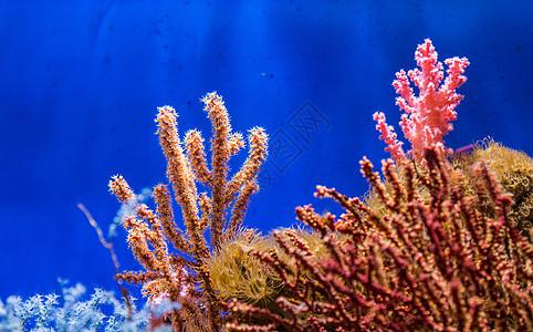 美丽的海底珊瑚礁图片