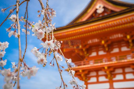 日本京都清水寺春季樱花图片