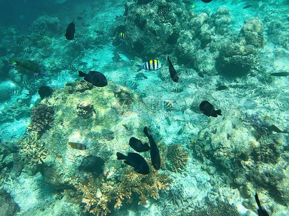 马来西亚沙巴海底世界图片