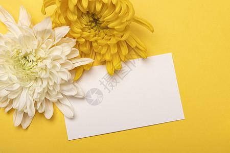 节日卡片菊花图片