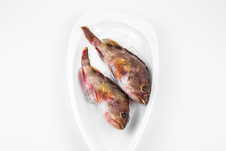 石斑鱼图片