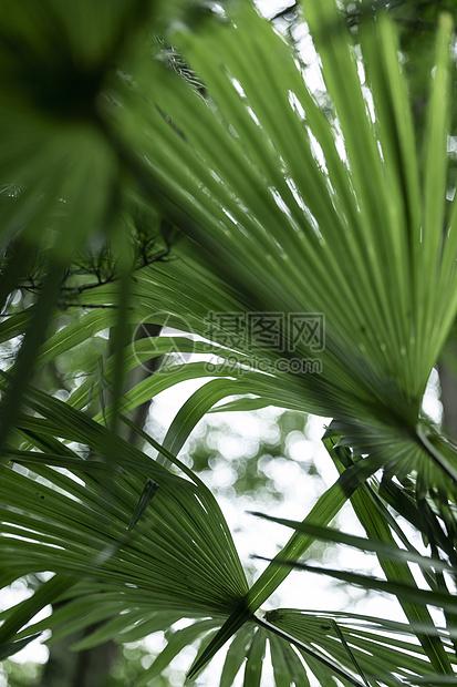 绿植绿叶图片