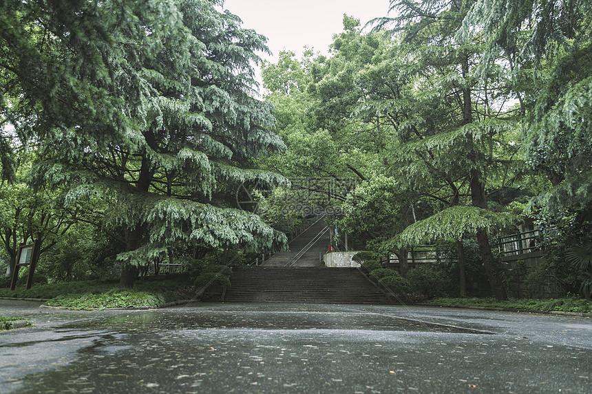 春季公园植物公园图片