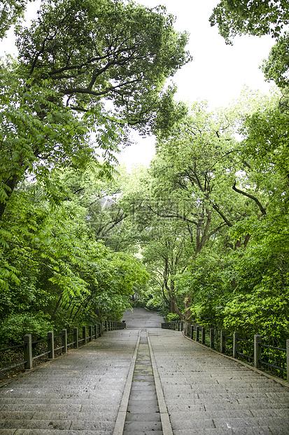 森林公园楼梯图片