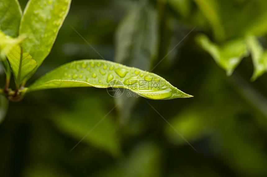 春天的草丛图片
