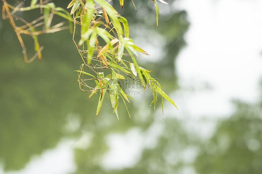河边的竹子图片
