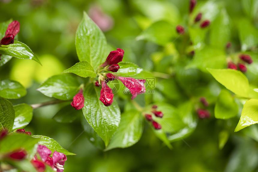 春天的红花图片