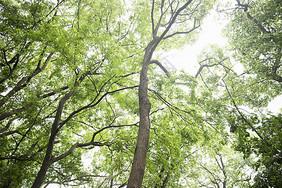 春天的树林图片