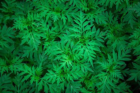 清新绿植图片