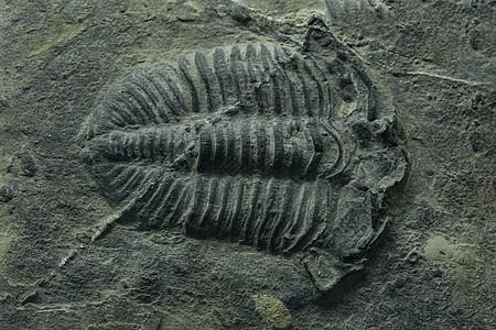 动物标本化石图片