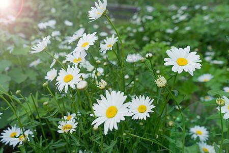 阳光下的花卉图片