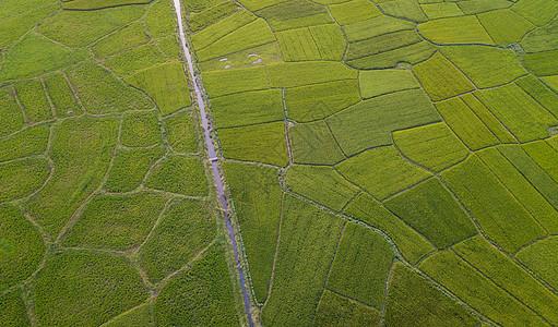 航拍农业水稻田图片