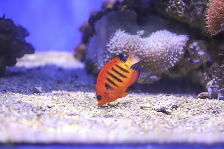 吃沙砾的小鱼图片