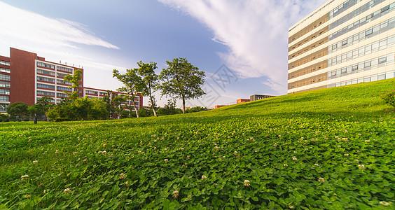 华东理工大学校园草坪图片