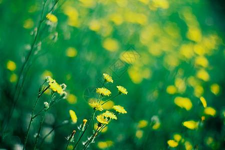 花园上的小花特写图片