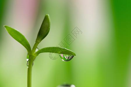 水滴中的花朵图片
