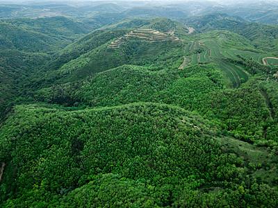 森林道路图片