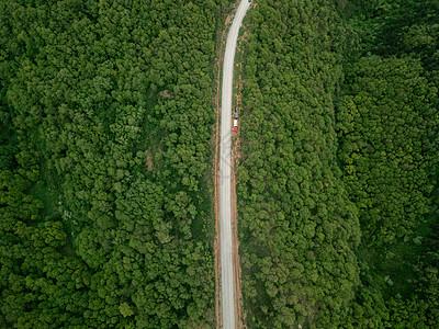 原始森林图片