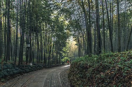 林间小路图片
