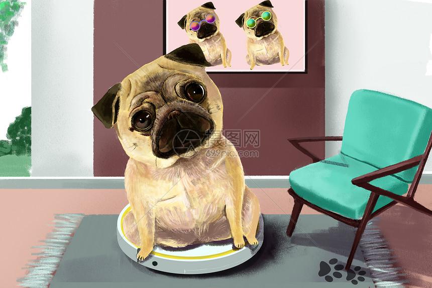神奇的动物之萌宠八哥犬图片