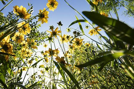 黄色小野花图片