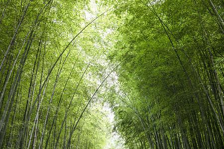 夏天竹林图片