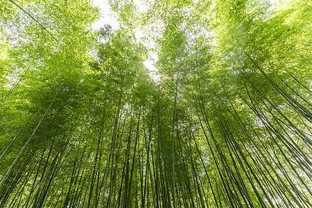 夏日竹林图片