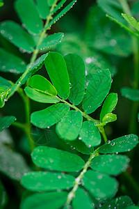 微距植物图片