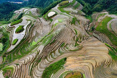 桂林平安寨梯田航拍图片
