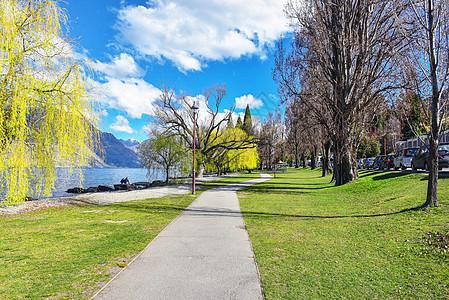 新西兰自然树木图片