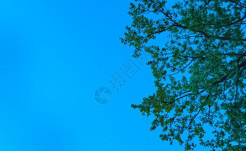 树picture