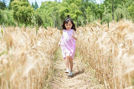 小女孩稻田奔跑图片