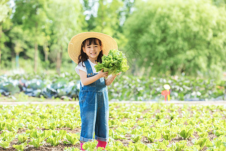 小女孩农场摘蔬菜图片