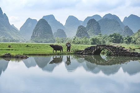 牛夫与牛在田野上图片