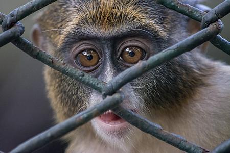 牢笼里的猴子图片
