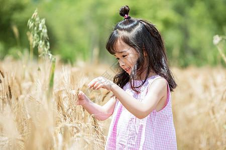 小女孩稻田玩耍图片